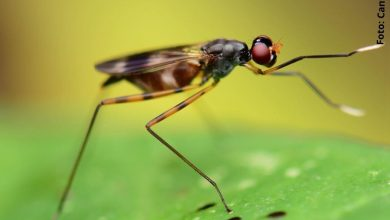 foto de un insecto