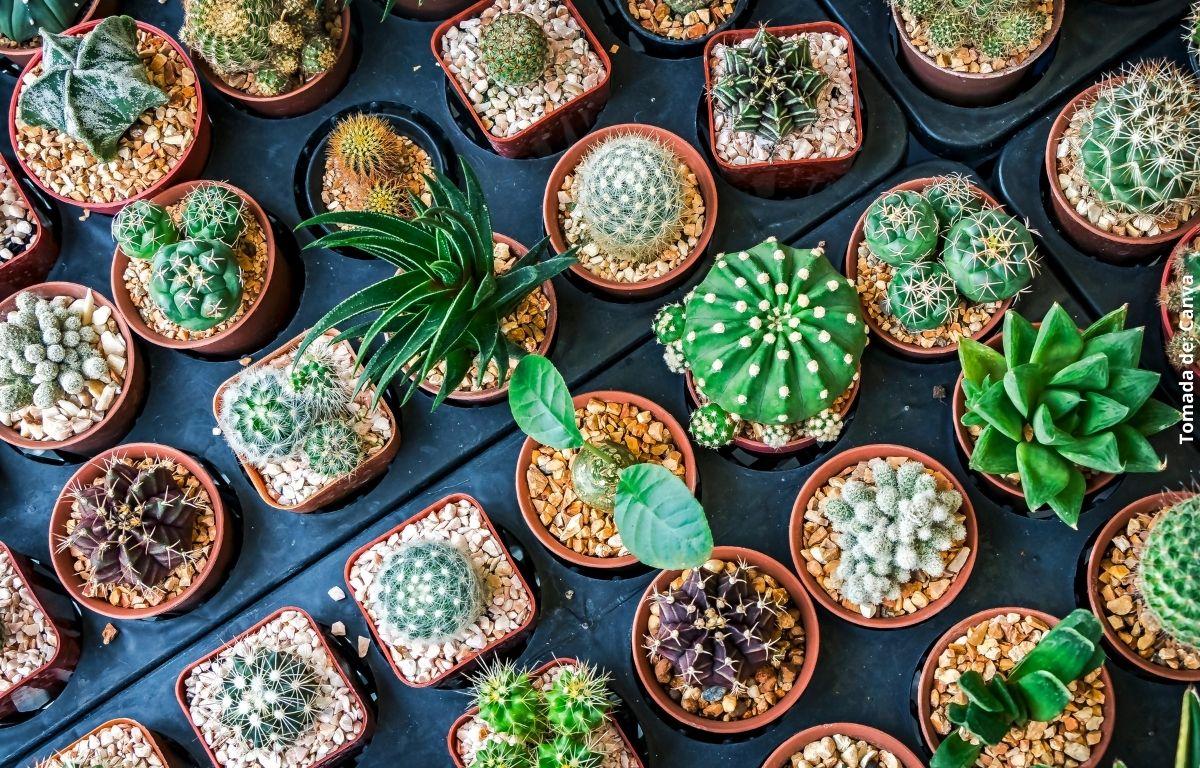 foto de varios cactus