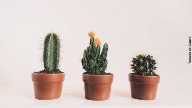 Cómo cuidar un cactus en casa para que crezca saludable