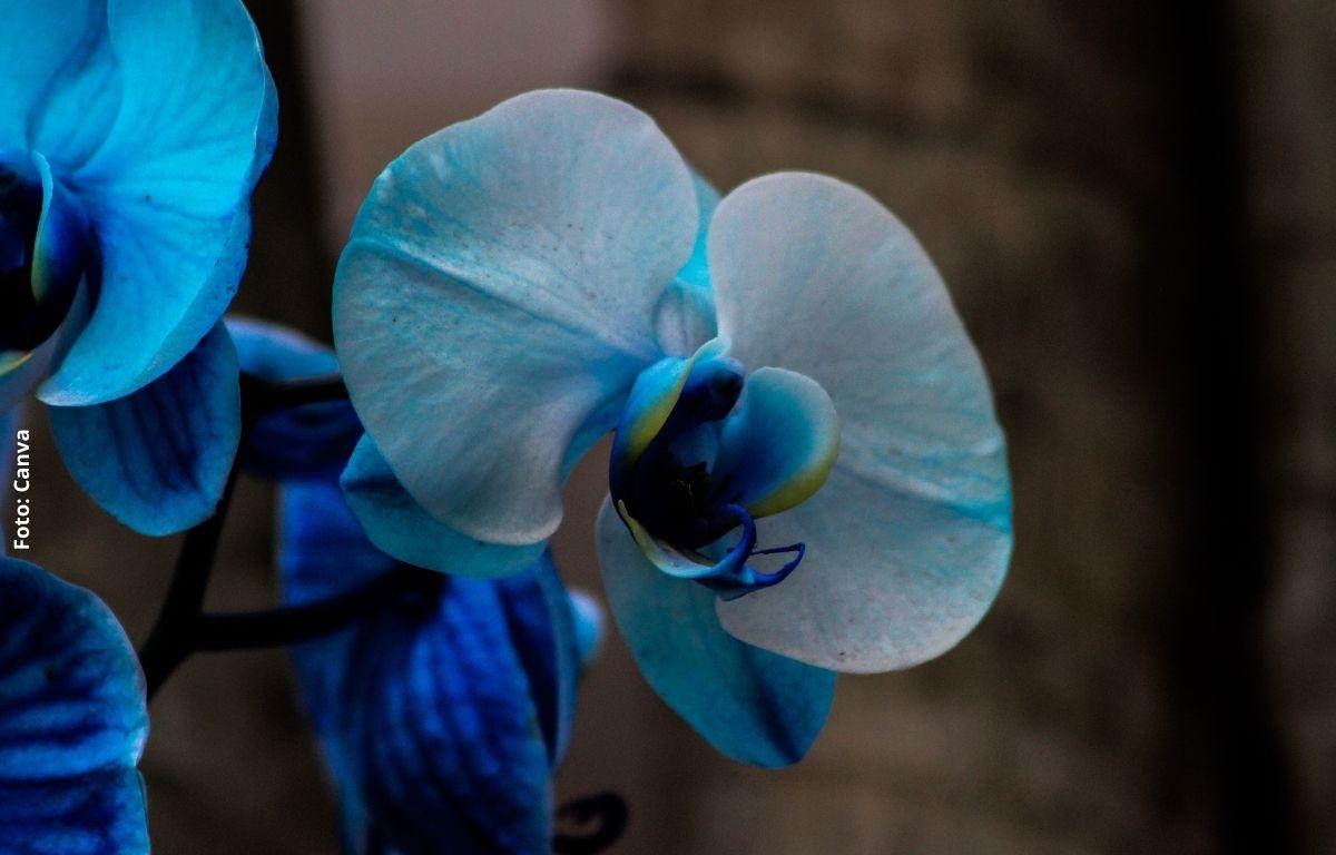 foto de una flor