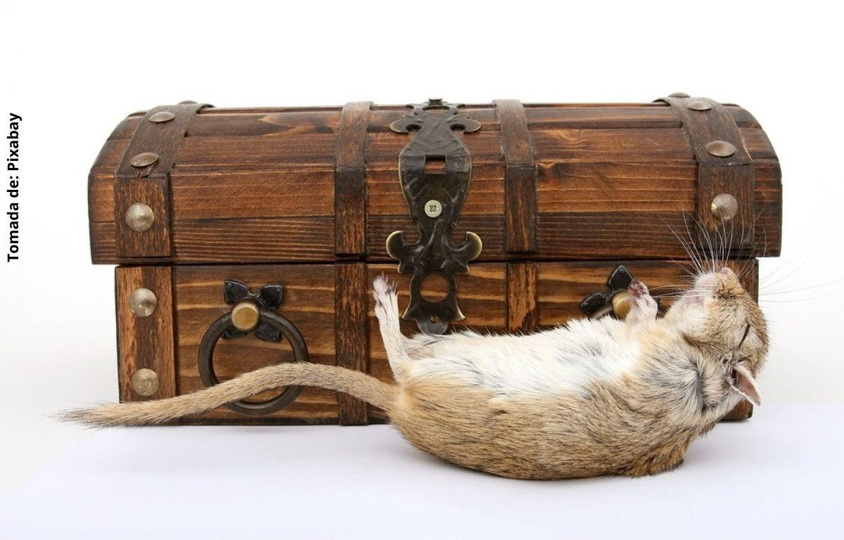 foto de ratón muerto