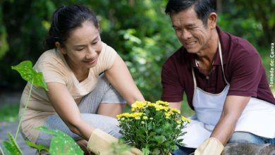 Cuidado de las plantas: consejos básicos