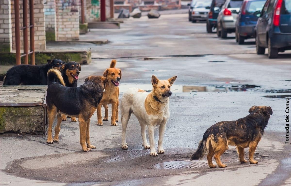 Joven sale a las calles para alimentar perros abandonados en cuarentena