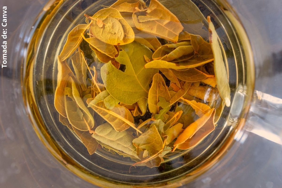 foto de unas hojas en agua