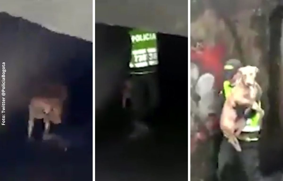 Policía salva a perrito de morir ahogado en un caño