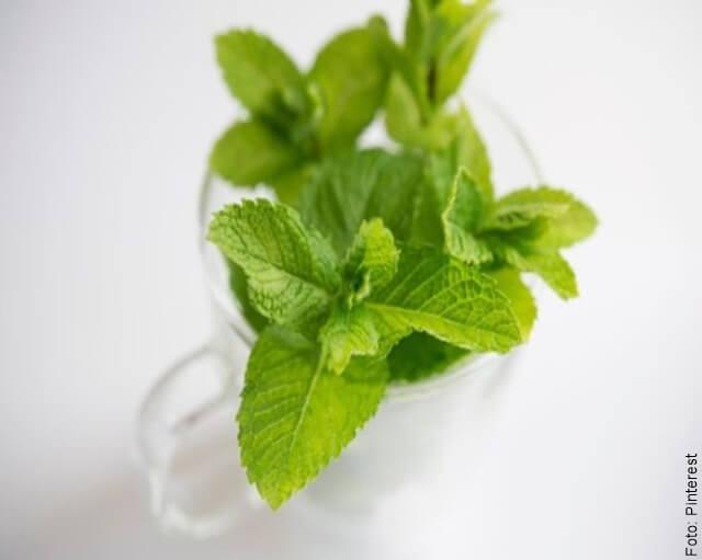 foto de hojas de hierbabuena en una copa