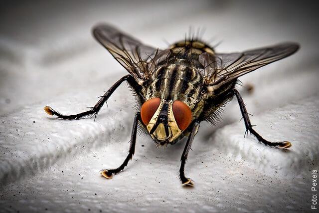 imagen de una mosca con patas grandes