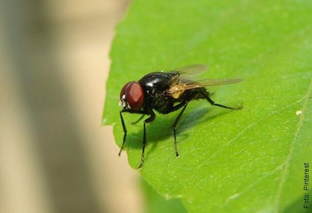 foto de una mosca sobre unas hojas