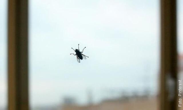 foto de una mosca en un vidrio