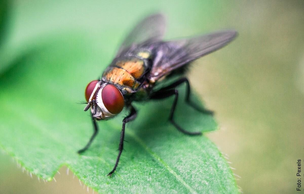 ¿Qué significa soñar con moscas? Ponle cuidado a tu salud