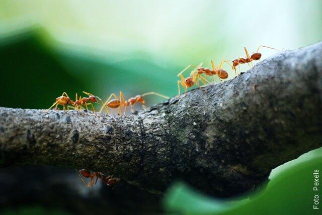 fotografía de hormigas trabajando