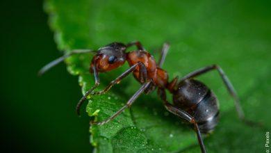 Soñar con hormigas, ¿qué significa?