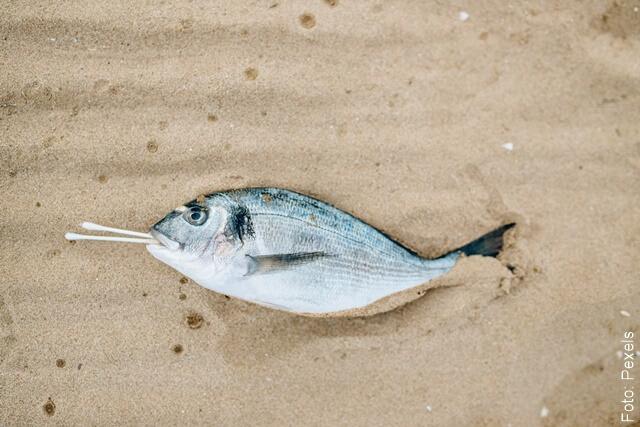 foto de pez muerto
