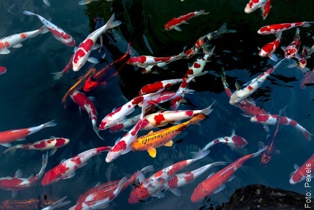 foto de muchos peces nadando