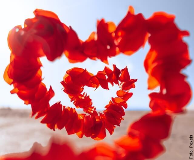 foto de pétalos en forma de corazón