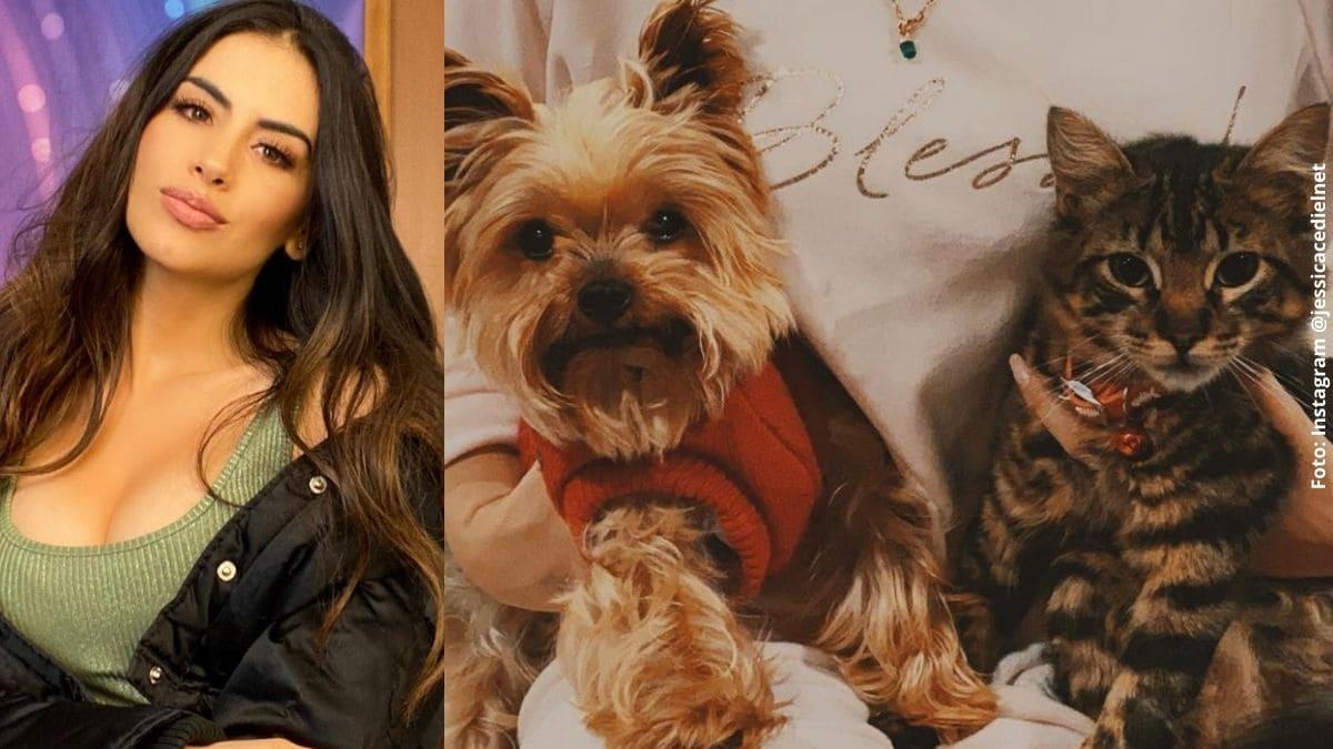 Jessica Cediel aseguró que sus mascotas se contagiaron de coronavirus
