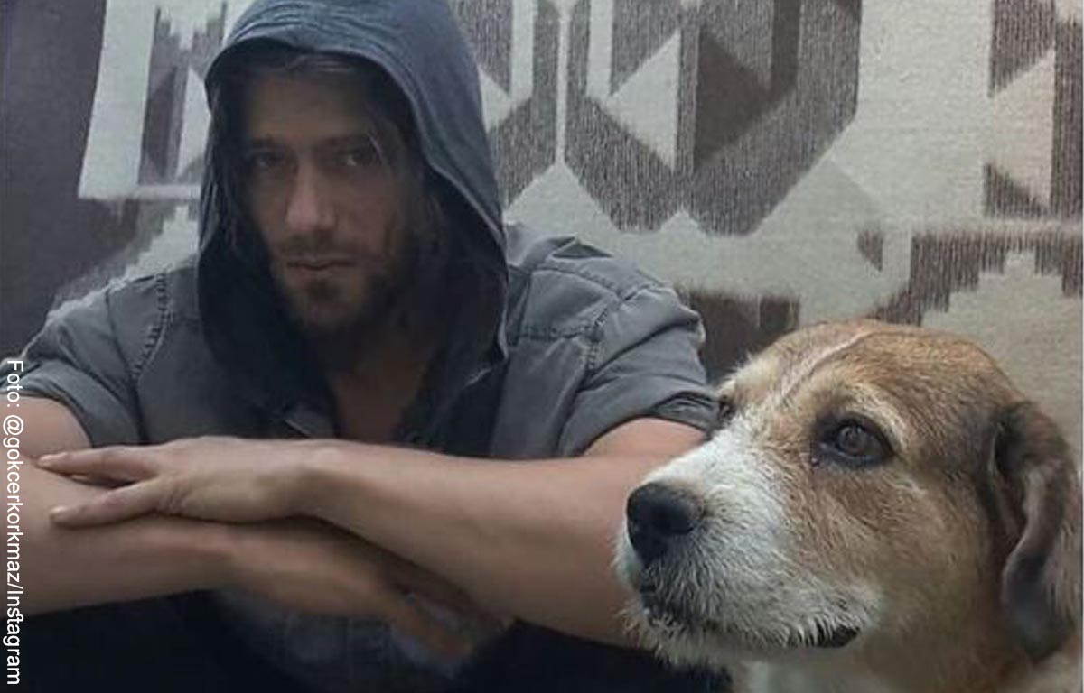 Modelo deja su fama para ayudar a animalitos abandonados