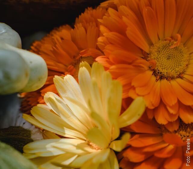 foto de flores de caléndula