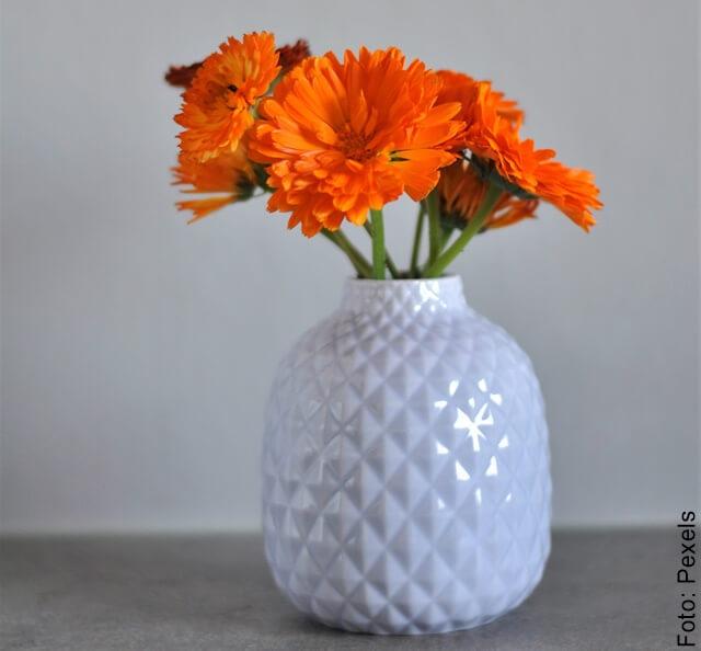 foto de florero con calédula