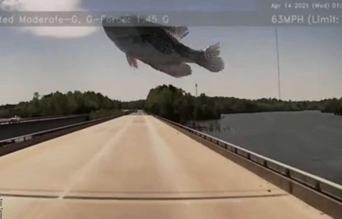 Video dejó registrado un pescado que cayó del cielo