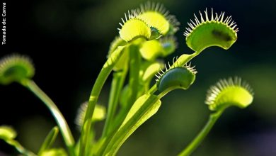 Plantas carnívoras: cuidados y tipos