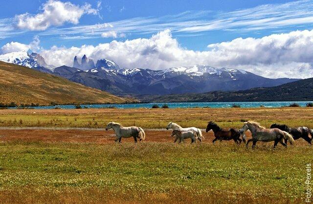 foto de muchos caballos