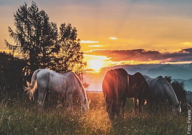 foto de caballos en el atardecer