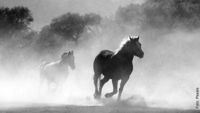 ¿Qué significa soñar con caballos? ¡Libera tu espíritu!