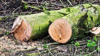 Sigue polémica en Bogotá por tala de árboles en la Avenida 68