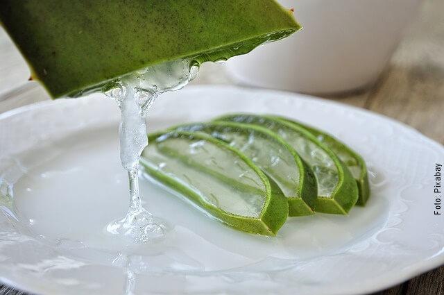 Cómo cuidar una planta de aloe vera, ¡es muy sencillo!