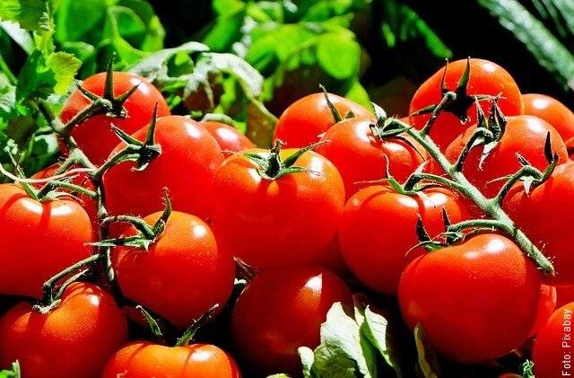 foto de muchos tomates