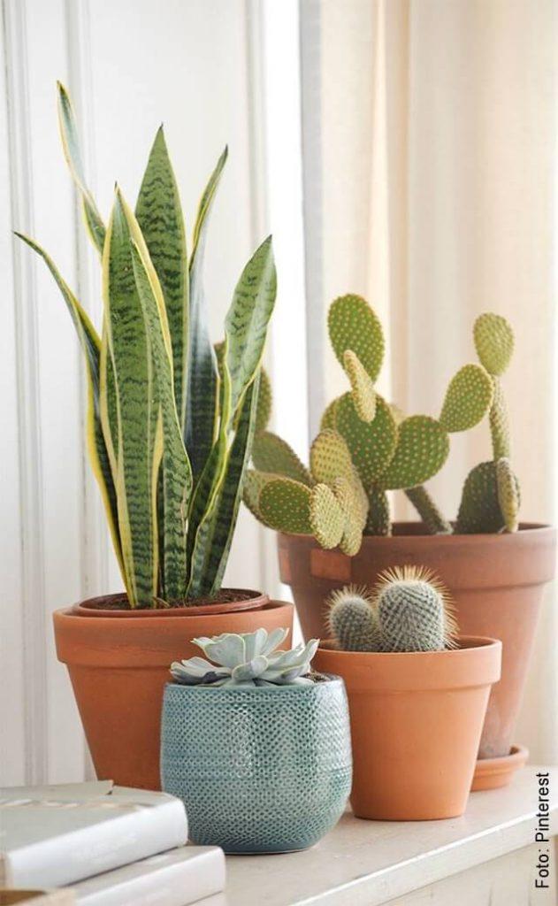 foto de plantas en macetas