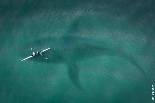 ilustración de ballena grande