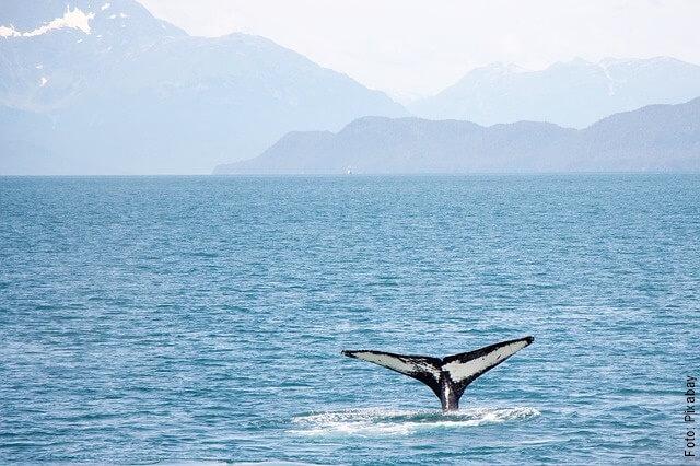 foto de la cola de una ballena