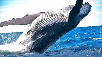 Lo que significa soñar con ballenas, ¡es sorprendente!