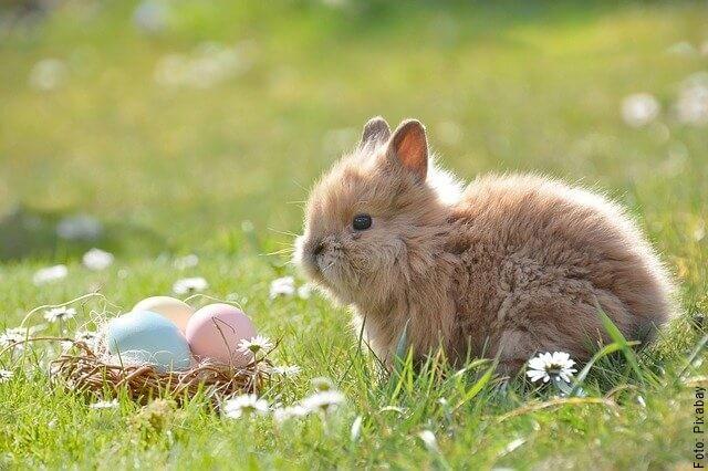 foto de conejo pequeño