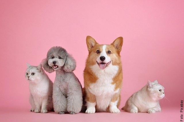 foto de varios animales