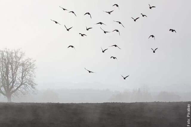 foto de palomas volando