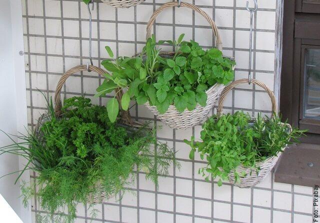 foto de plantas sembradas en casa