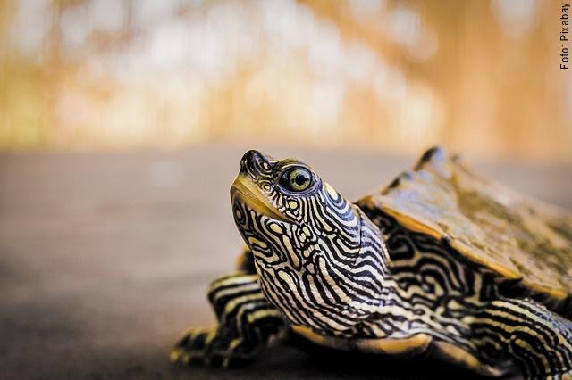 foto de una tortuga