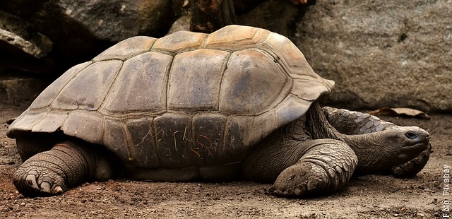 foto de tortuga grande