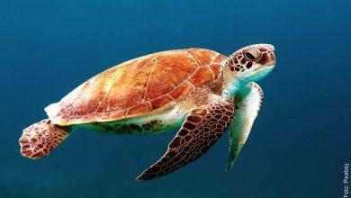 ¿Qué significa soñar con tortugas? ¡Es de buena suerte!