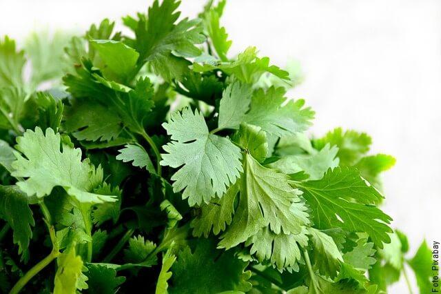 foto de cilantro