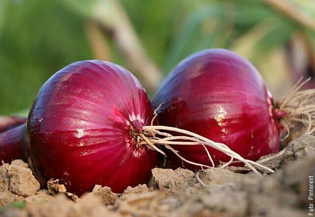 foto de cebolla roja
