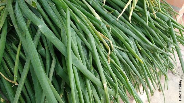 foto de cebolla larga verde