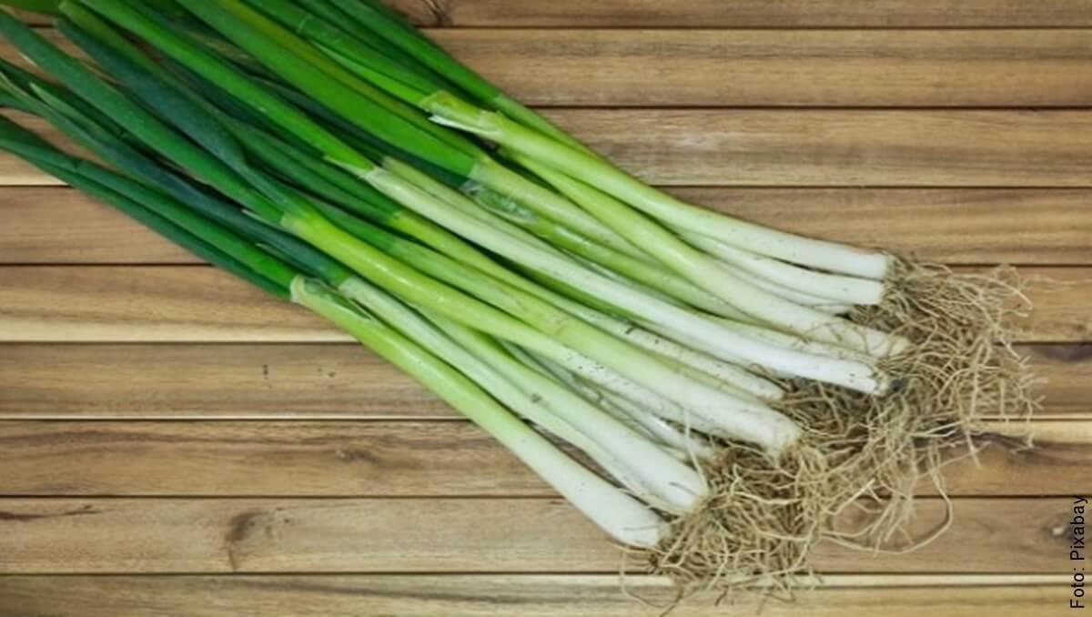 ¿Cómo cultivar cebolla larga? ¡Es fácil y práctico!