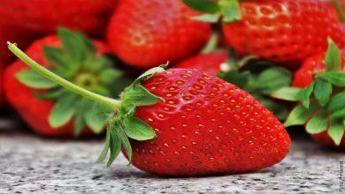 ¿Cómo sembrar fresas en casa? ¡Es muy fácil!