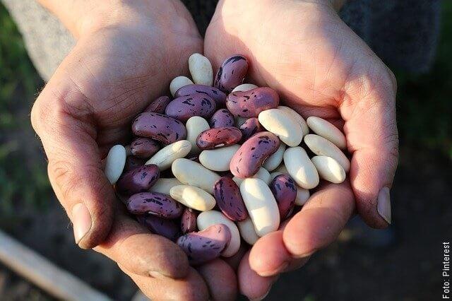 foto sosteniendo granos de frijol