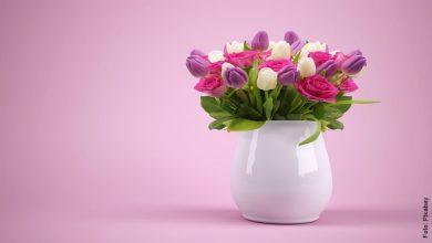 Cuidado de tulipanes, ¡que tu casa florezca siempre!