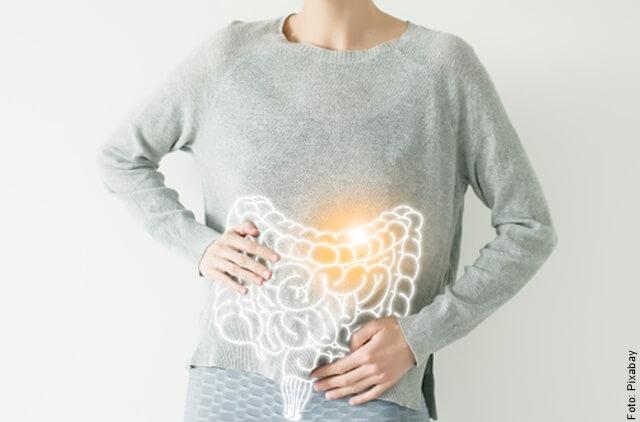 ilustración del sistema digestivo